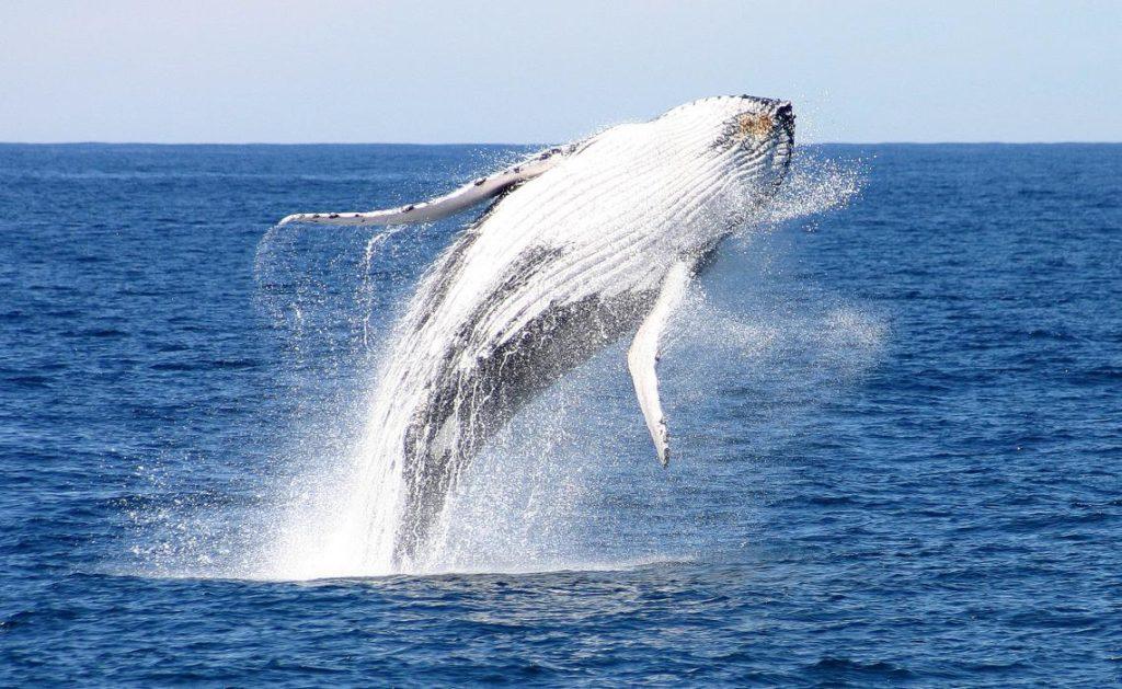 Whale season is coming